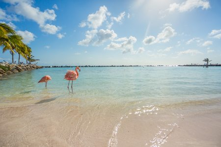 Planning Your Destination Wedding? Visit These Caribbean Islands.